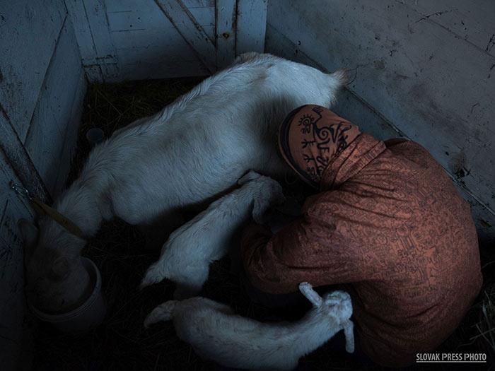 barbora-skopalikova-kravi-kout-3